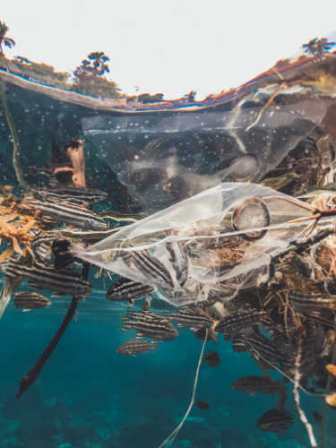 7 reasons to reconsider the use of plastic. Why we must avoid plastic use
