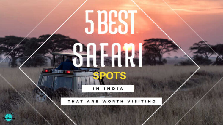 5 best safari spots in India that are worth visiting